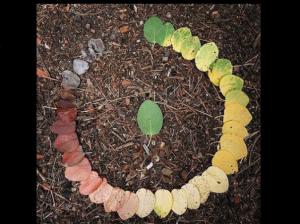 Circle-of-Life-635x476